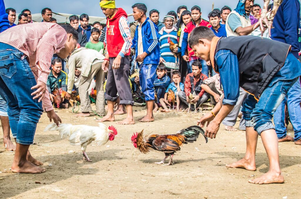 Cockfight_at_Jonbeel_mela