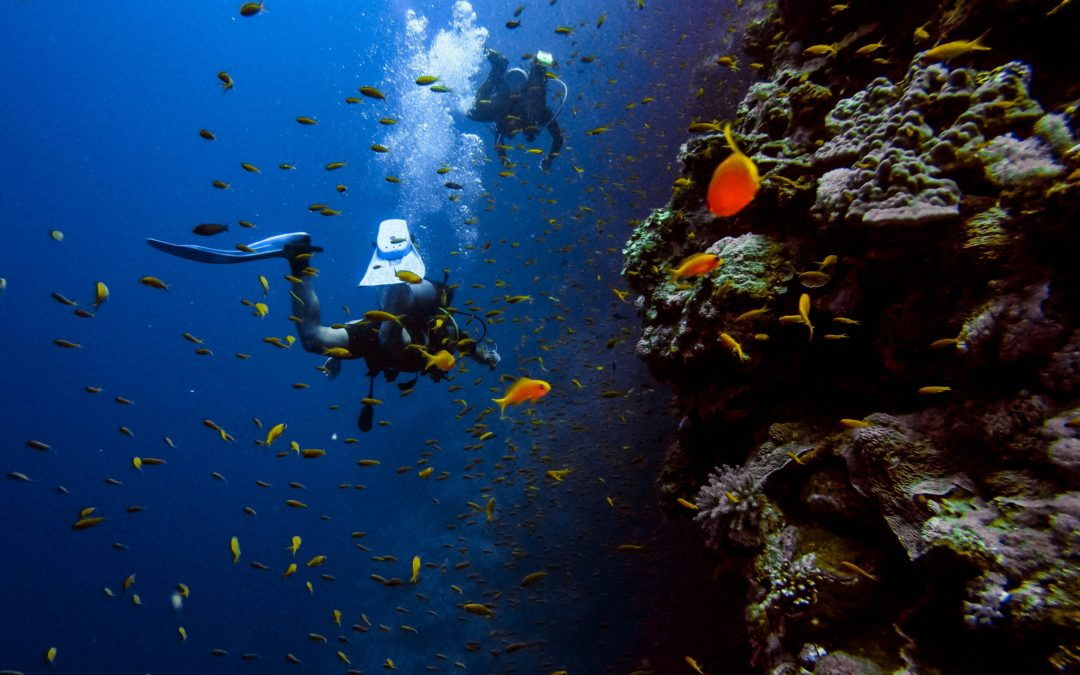 These Amazing Scuba Diving Spots Let You See All the Underwater Beauties Around the World — They're Perfect for Thrill Seekers!