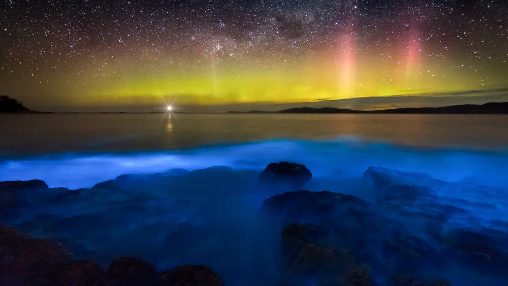A Constellation of Stars Underwater: 10 Glow in the Dark Destinations That Truly Are Nature's Most Beautiful Mysteries
