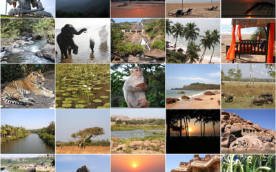 Magic Tricks, Yoga Tips, Storytelling, and Cooking Contests: How These 8 Indian States are Reaching Out to Potential Travellers!